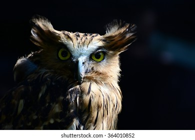 The Yellow Eye Colors of Owls