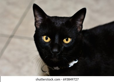 The yellow eyes of the black cat