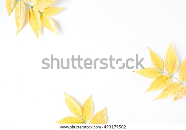 yellow fall autumn leaves. Autumn floral frame. flat lay, top view
