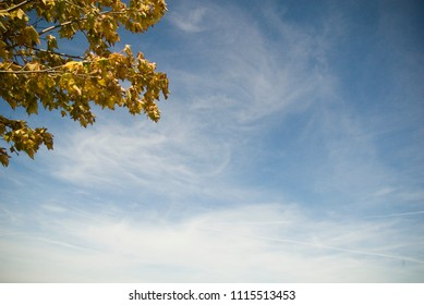 Yellow Fall Leaves against Blue Sky