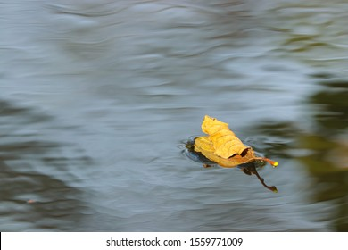A yellow fallen autumn leaf floating on the surface of the blue grey water, with ripples around in the bottom right section of the image.