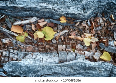 Yellow fallen autumn leaves rest on a grey aged old log typically found in forests and woodlands during the fall