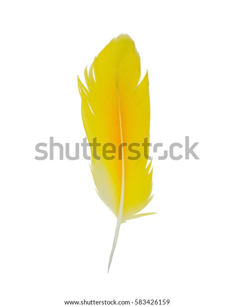 Yellow feather on white background