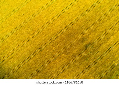Yellow field aerial view. Agricultural field view from above. Harvest background. Autumn backdrop.