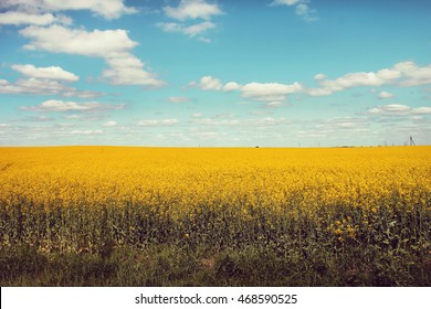 Yellow field and blue sky with white clouds, summer harvest background, nature landscape with yellow flowers, field of rapeseed with beautiful cloud - plant for green energy