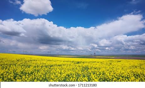 Champ jaune de viols fleuris et ciel bleu avec nuages. Arrière-plan paysage naturel
