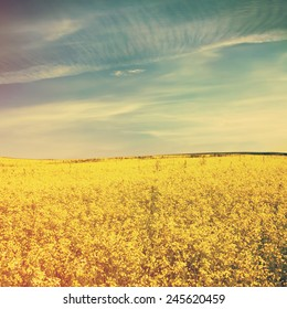 Yellow field rapeseed and blue sky, retro film filtered, instagram style