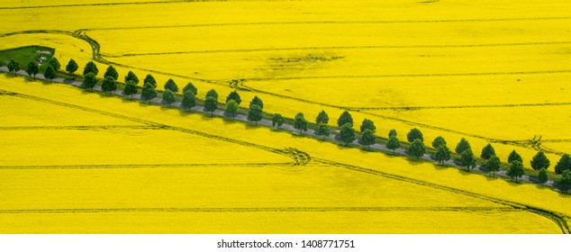 Yellow field of rapeseed on agricultural fields of spring Poland