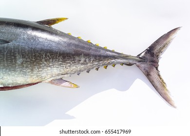Yellow fin tuna on white background