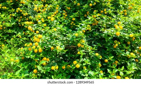 yellow flawer and garden