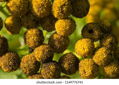 Yellow floral weed