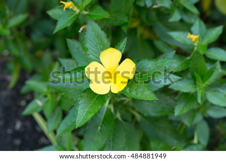 Yellow flower 5 petals stock photo edit now 484881949 shutterstock yellow flower 5 petals mightylinksfo