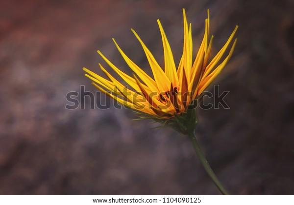 Yellow flower against dark background