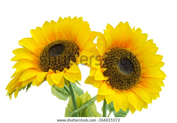 yellow-flower-agricultural-plants-used-6