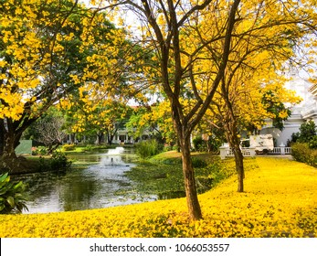 Yellow flower and Yellow autumn trees in the park