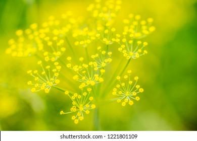Yellow flower background illustration
