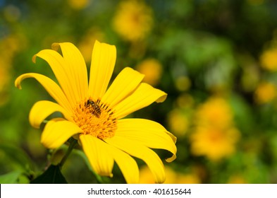 Yellow flower with bee at Thailand