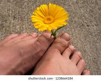 a yellow flower between two feet
