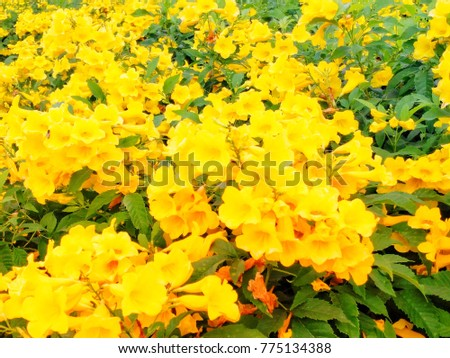 Yellow flower blossom winter this flower stock photo edit now yellow flower blossom in winter this flower call yellow elder its a small shrub mightylinksfo