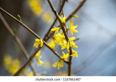 Yellow flower blossoms