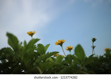 yellow flower in the blue sky