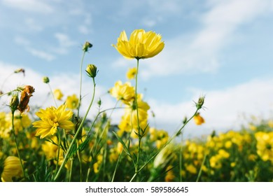 yellow flower with blue sky. vintage color