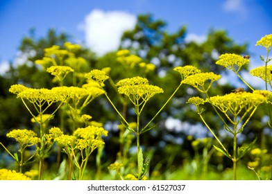 yellow flower and blue sky and white cloud