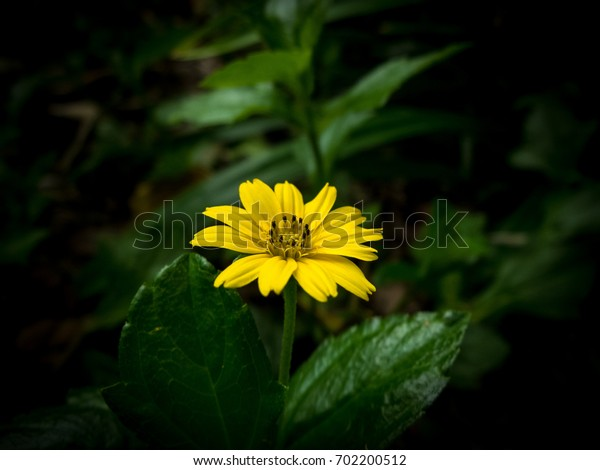 yellow flower and blur background in the green and fresh garden