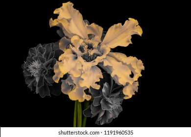 yellow flower and bouquet on a black background.