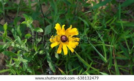 Yellow flower brown center stock photo edit now 638132479 yellow flower with brown center mightylinksfo