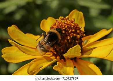 yellow flower and bumblebee
