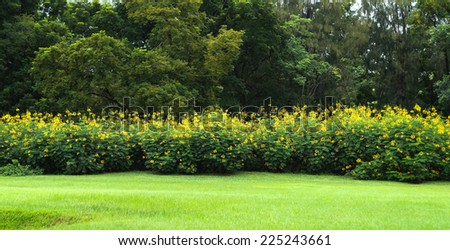 Yellow Flower Bushes Stock Photo Edit Now 225243661 Shutterstock