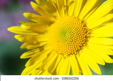 Purple flower with yellow center images stock photos vectors yellow flower close up mightylinksfo