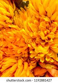 Yellow Flower Display