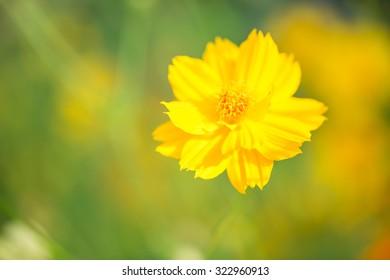 Yellow flower in field