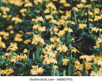 Yellow Flower Field And green leaves.