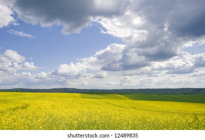 yellow flower field on sunny day