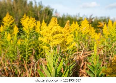 yellow flower in the fields
