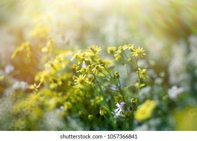Yellow flower - flowers in meadow, beautiful nature in spring
