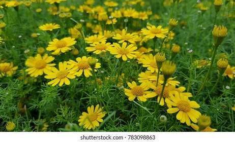 Charmant Yellow Flower In The Gardent