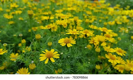Superieur Yellow Flower In The Gardent