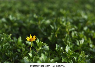 Yellow flower and green background like a differentiation colour concept