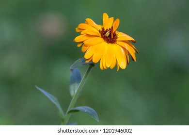 Yellow flower in a green field with an out of focus background