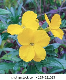 Yellow flower and green foliage