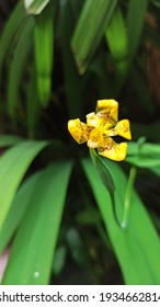 yellow flower in green leaf