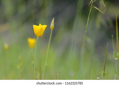 Tall yellow weed images stock photos vectors shutterstock yellow flower and green tall grass on natural environment background in soft focus mightylinksfo