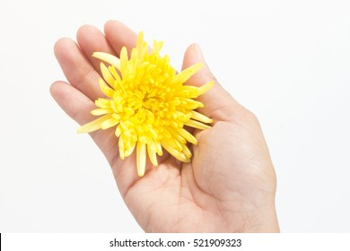 A yellow flower in a hand