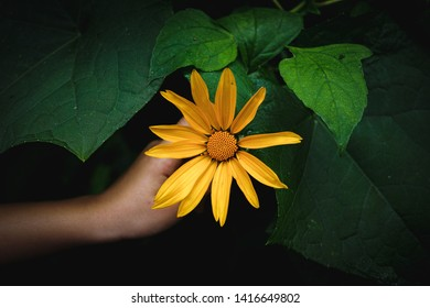 Yellow flower and human hand with green leaves in the background