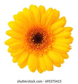 Yellow flower images stock photos vectors shutterstock yellow flower isolated mightylinksfo