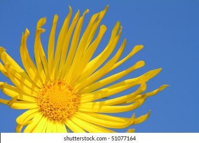 Yellow flower isolated against a blue sky